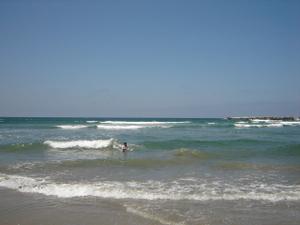 Dog_beach_06_001