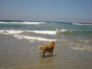 Dog_beach_06_002