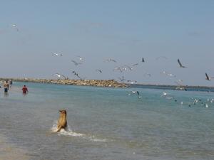 Dog_beach_06_025